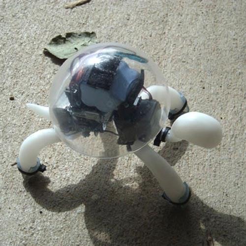 crabfu tortoise