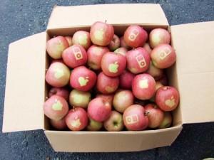 The Apple Logo Apple's