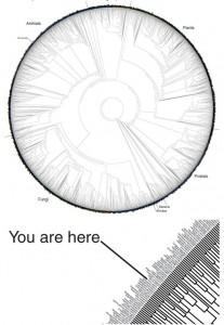Massive Tree of Life Printable Graphic
