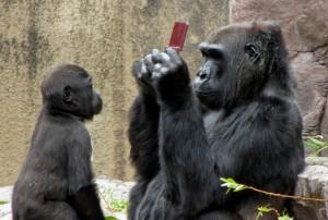Gorilla at San Francisco Zoo Gears Up for Donkey Kong Tournament