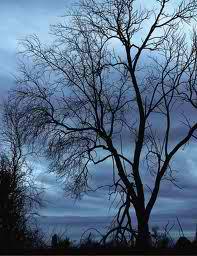 Dutch University: WiFi Mutates Trees