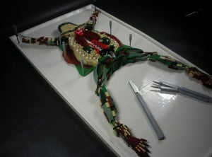 Lego Dissected Frog is Gross and Cool