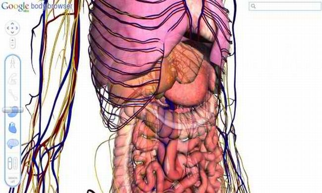 Google Body Browser Lets You And Med Students Discover Anatomy
