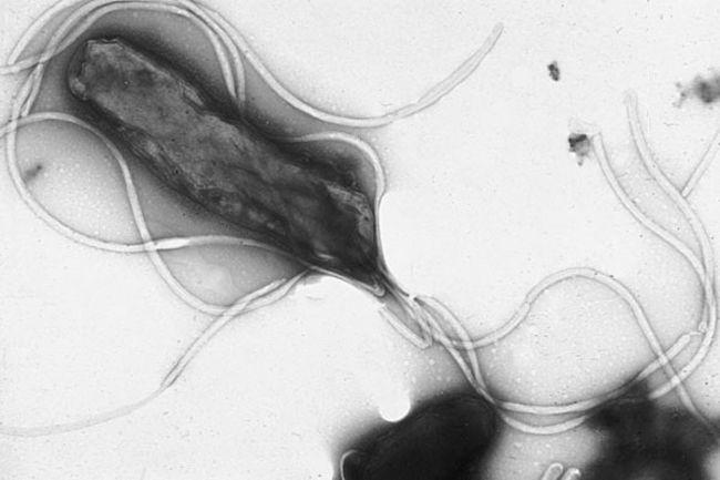 Bacteria 01