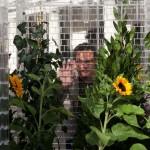Lego-greenhouse_2