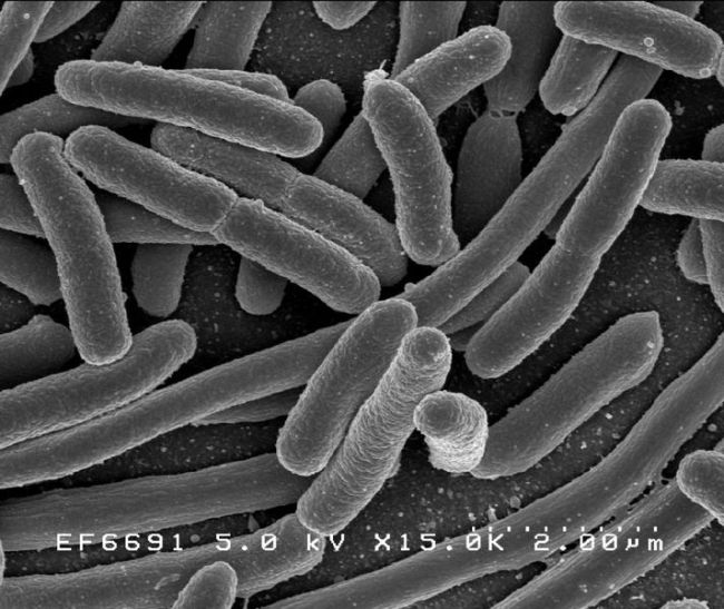Bacteria 02