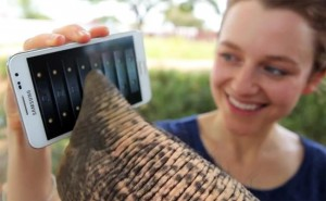 The Samsung Galaxy Note Was Made For Elephants (Video)