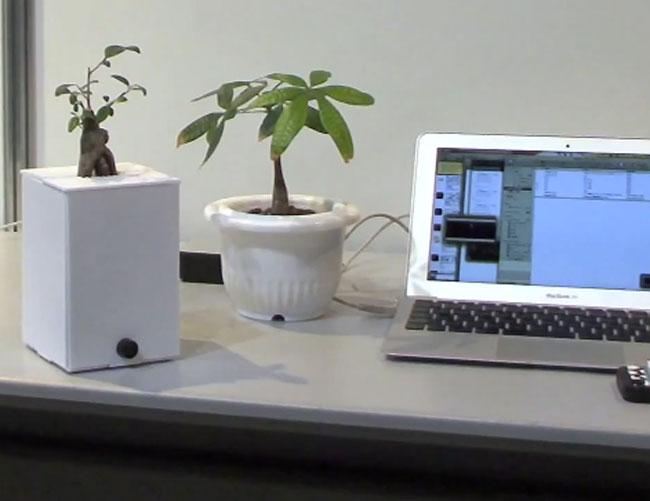 Interactive Plants