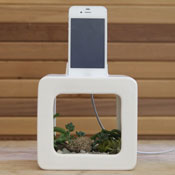 Bloombox-Natural-Acoustic-Amplifying-iPhone-Dock