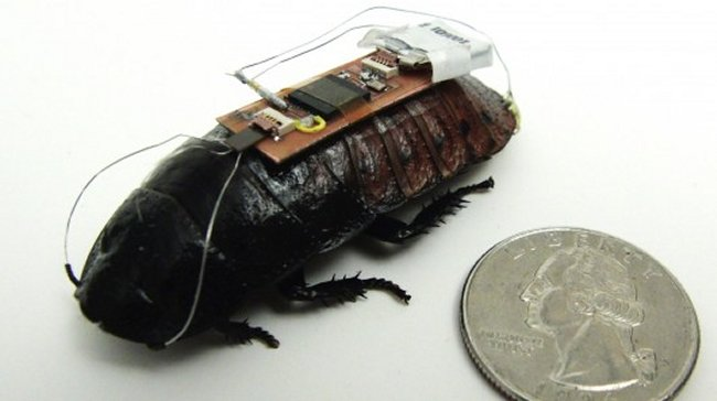 Scientists creating remote-controlled cockroaches | Techdigg.info