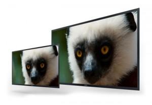 Sony 4K OLED Professional Monitor Prototypes Unveiled