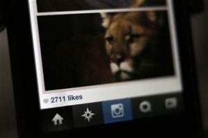 Instagram Virus Used in Marketing Scam