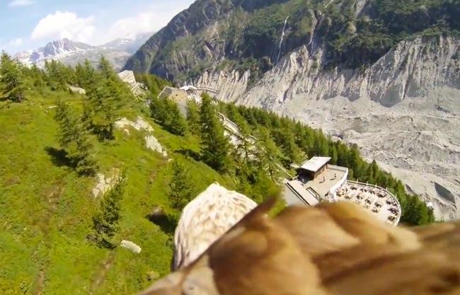 Flying Eagle Video