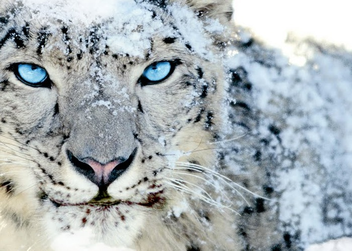 apple snow leopard os x 106 updates no longer being