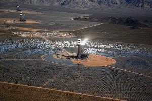California Ivanpah Solar Plant Kills Birds with 1000F Heat