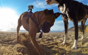 GoPro Fetch Harness For Dogs Announced (Video)