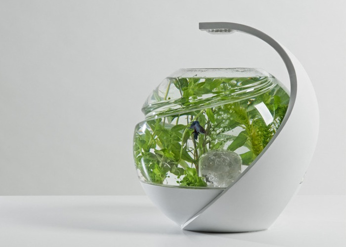 Avo tropical self cleaning fish tank launches on for Self cleaning betta fish tank