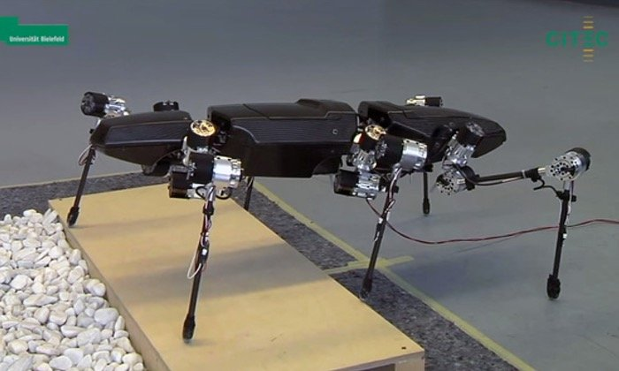 Hector 6 Legged Robot