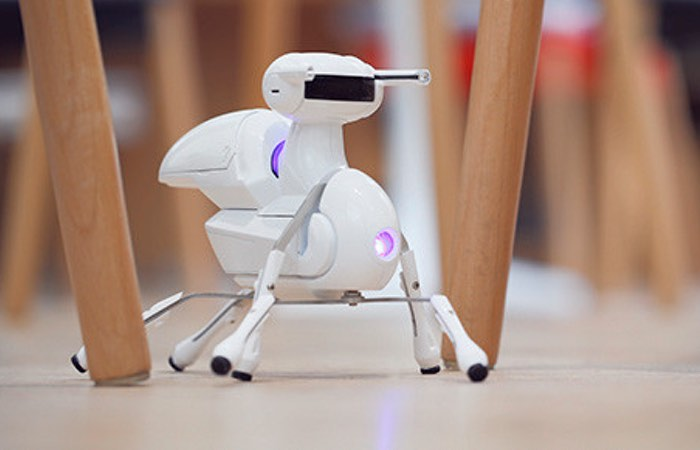 Antbo Robot