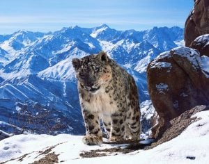 Planet Earth II Trailer Released For New Natural History Series Airing Next Month (video)