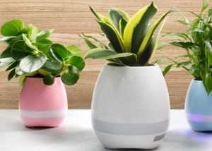 Plant La La Interactive Flower Pot (video)