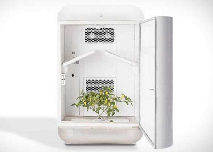 Seedo Hydroponic Growing System