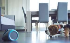 Laïka Is A Robot Friend For Your Dog (Video)