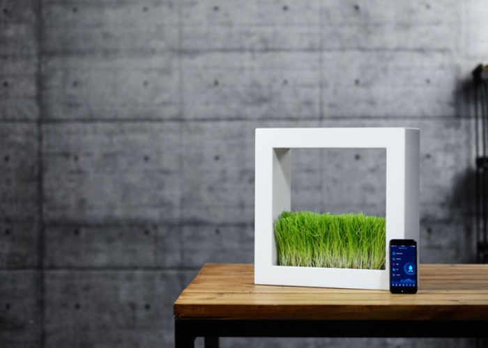 greenox indoor smart garden complete with companion app
