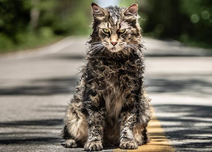 Pet Sematary 2019 movie