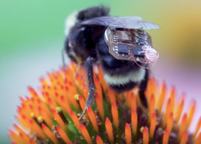 Bees wearing sensors monitor crops using backscatter communication