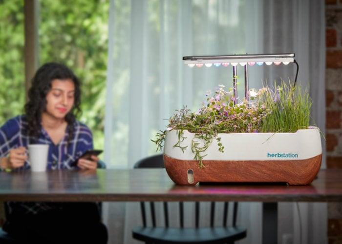 Grow fresh herbs at home