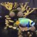 Undersea AR experience