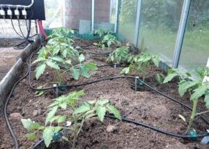Raspberry Pi plant irrigation system