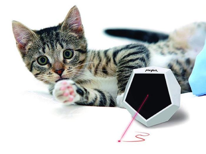 Playdot Laser Toy + Playroll Self-Spinning Ball Bundle