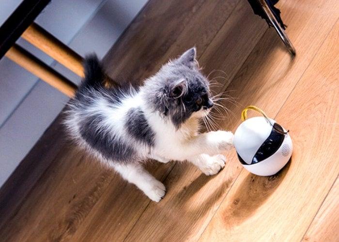 Ebo cat companion
