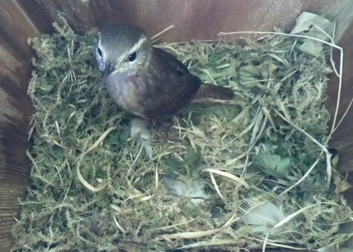 Raspberry Pi bird nest box camera project