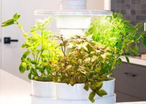 UrbiPod Smart Garden