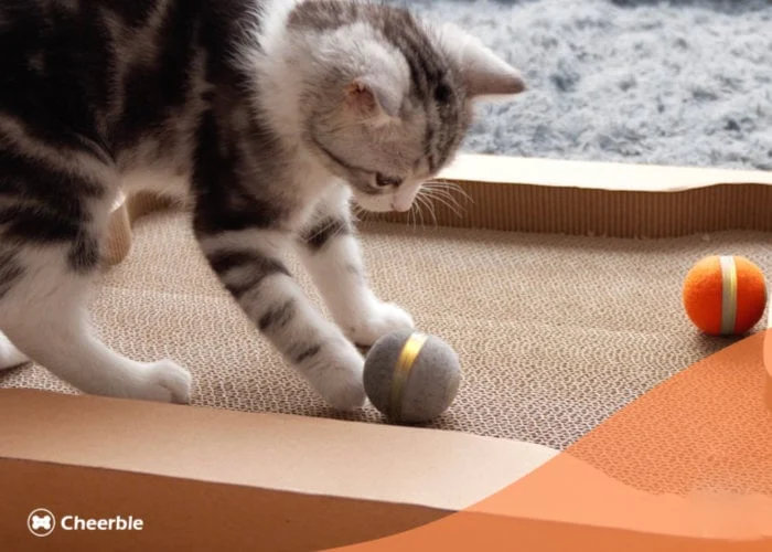 Keep your cat happy with the Cheerable cat toy and board - geeky gadgets