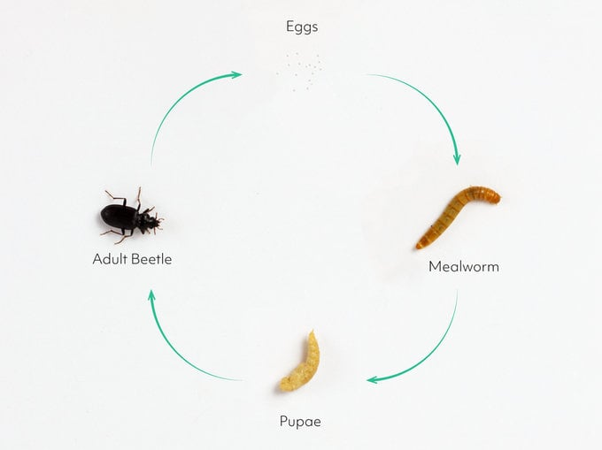 home insect growing