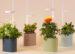Nano indoor garden