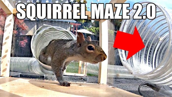 Backyard Squirrel Maze 2.0