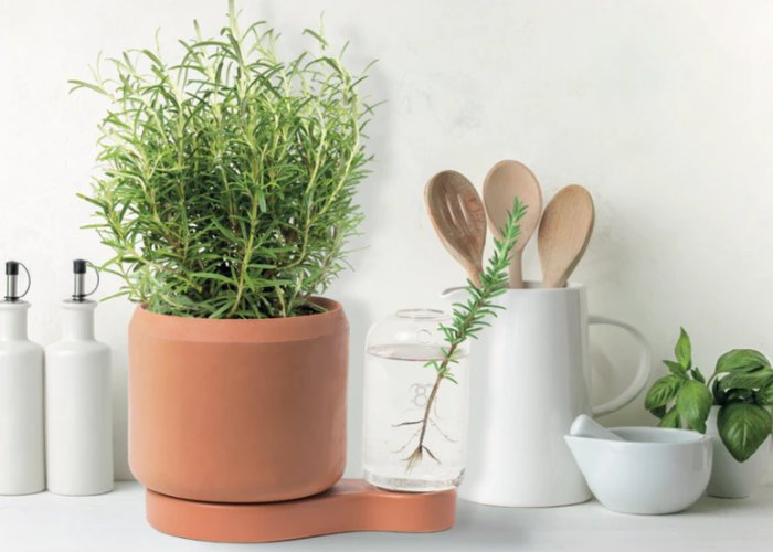 automatic watering pot