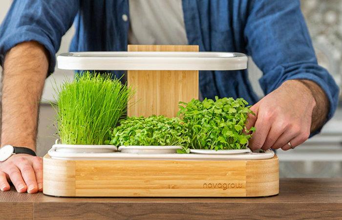 Novagrow superfood indoor garden grows nutrient-dense herbs and greens