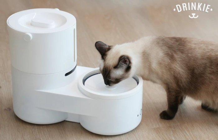 Drinkie self-cleaning cat water fountain