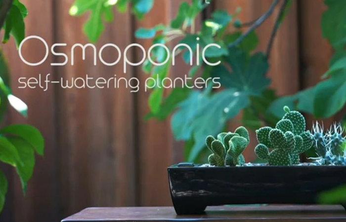 Osmoponic ceramic self watering planters